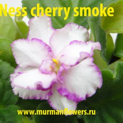 Ness cherry smoke